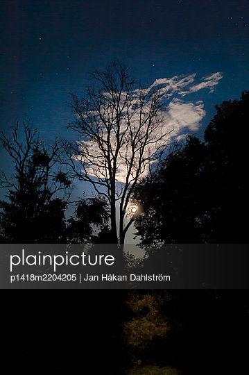 Moonshine over forest - p1418m2204205 by Jan Håkan Dahlström