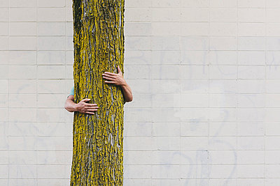 A man hugging a tree on an urban street in Seattle.  - p1100m875435 by Paul Edmondson