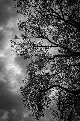 B&W trees - p1402m2098812 by Jerome Paressant