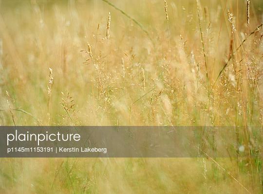 Feld - p1145m1153191 von Kerstin Lakeberg