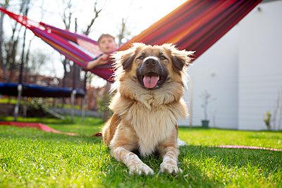 Hund mit Junge im Garten - p1308m2247475 von felice douglas