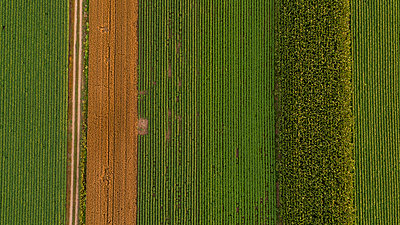 Serbia, Vojvodina, Aerial view of corn, wheat and soybean fields in the late summer afternoon - p300m2012912 von oticki