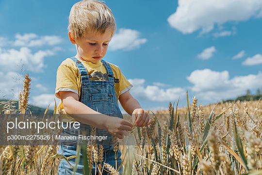 Cute boy looking at barley on field during sunny day - p300m2275826 by Mareen Fischinger