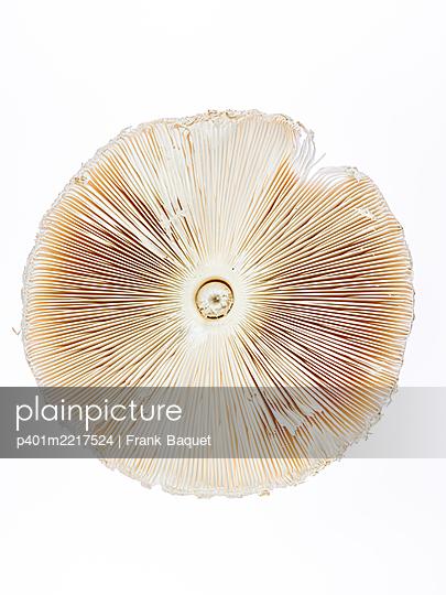 Riesenschirmpilz, Parosolpilz - p401m2217524 von Frank Baquet