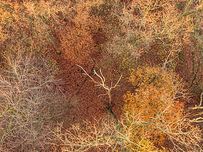 Autumn forest, aerial view - p586m1092031 by Kniel Synnatzschke