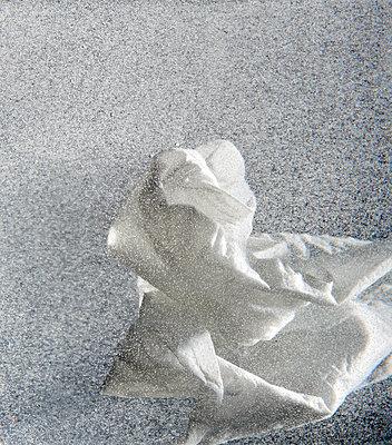 White blossom - p1629m2227385 by martinameier