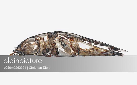 Bug - p250m2263321 by Christian Diehl