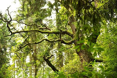 Teutoburger Wald - p606m852236 von Iris Friedrich