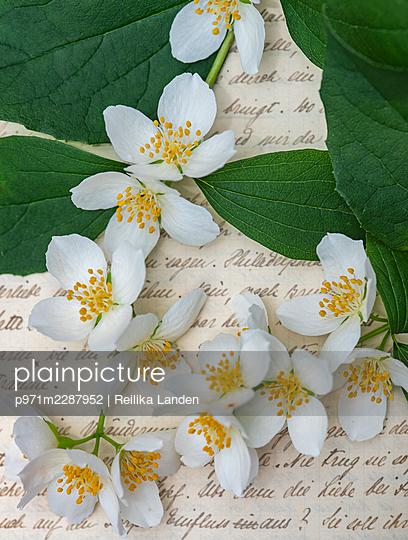 Flowers on letter - p971m2287952 by Reilika Landen