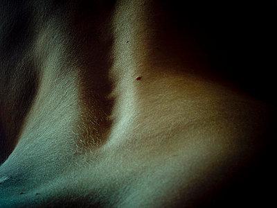 Rücken - p4451239 von Marie Docher