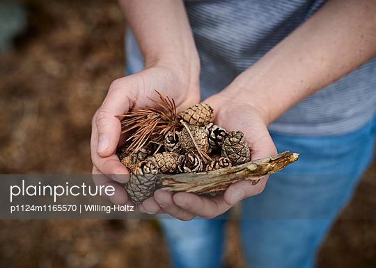Fundstücke im Wald - p1124m1165570 von Willing-Holtz