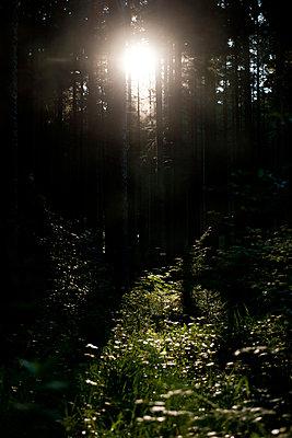 Sonnenstrahlen im Wald - p533m1068431 von Böhm Monika