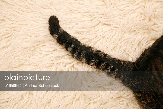 Cat on a carpet - p1650864 by Andrea Schoenrock