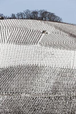 Weinberge im Winter - p248m1004112 von BY