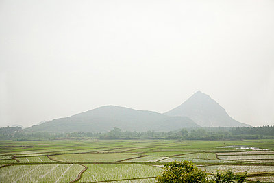China, guangxi province, yangshuo, rice fields - p9244884f by Image Source