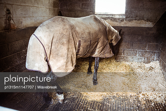Horse with blanket eating straw in the countryside