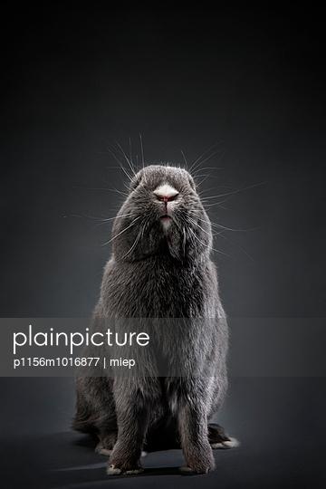 Kaninchen - p1156m1016877 von miep
