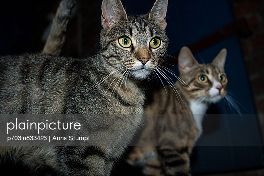 Cats - p703m833426 by Anna Stumpf