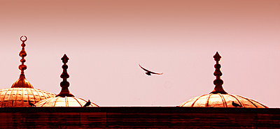 Bird over a mosque - p1445m2134270 by Eugenia Kyriakopoulou