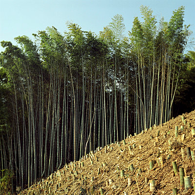 Abgeholzter Wald - p4860018 von anneKathringreiner