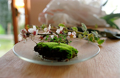 Moss and almond blossom - p1120549 by AMI