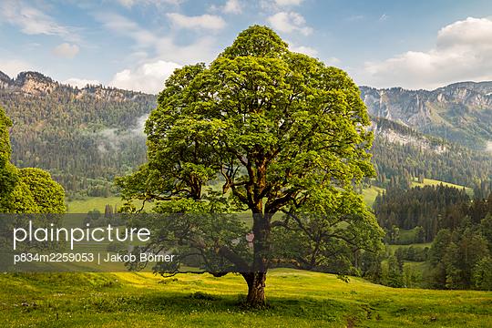 Germany, Bavaria, Enchanted Tree - p834m2259053 by Jakob Börner