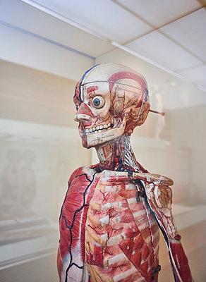 Körpermodell Hygienemuseum Dresden - p390m1221951 von Frank Herfort