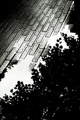 Puddle - p971m1480861 by Reilika Landen