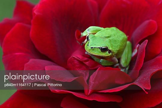 p840m1164117 von Pascal Pittorino