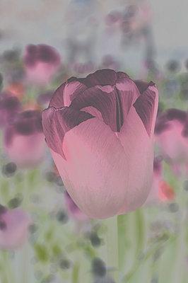 Red flower - p1668m2288179 by daniel belet