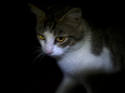 Kätzchen im Halbdunkel  - p945m1161614 von aurelia frey