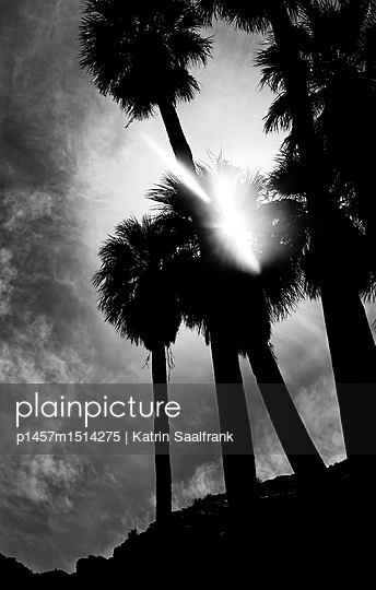 p1457m1514275 by Katrin Saalfrank