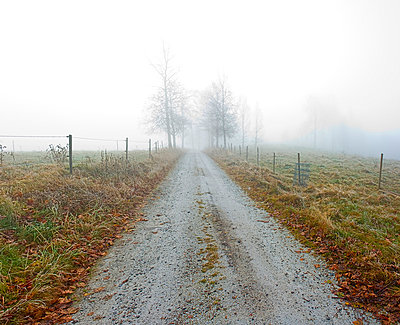 Scenic and peaceful shot of dirt country road with autumn leaves along landscape in fog - p1025m789010f by Peo Quick