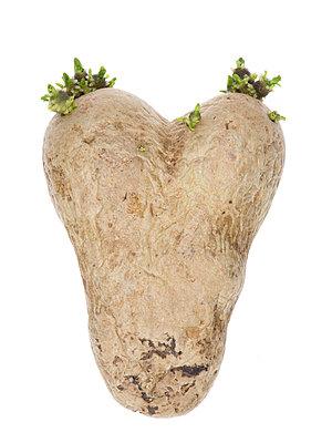 Potatoe - p401m1055390 by Frank Baquet