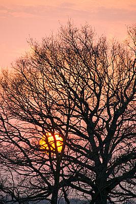 Sonnenuntergang mit kahlem Baum - p1199m1564338 von Claudia Jestremski