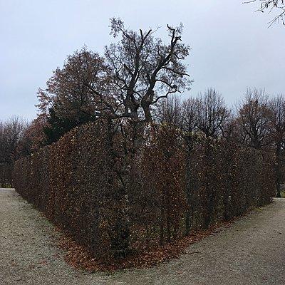 Gestutzte Hecke im Herbst, Schlosspark Schönbrunn - p1401m2229893 von Jens Goldbeck
