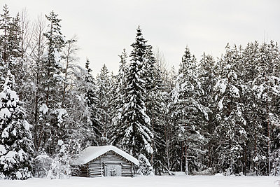 Scandinavia, Finland, Kittilaentie, Wooden hut at the edge of the forest - p300m937517 by Stephan Rech