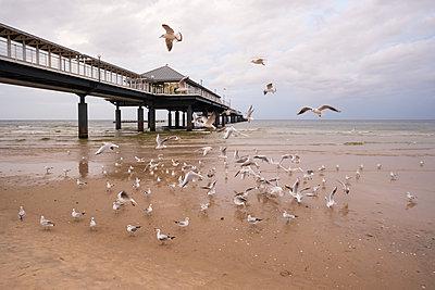 Germany, Usedom, Heringsdorf, seagulls at pier - p300m1205342 by Martin Siepmann