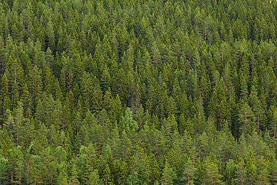 Sweden, Dalarna, dense green forest - p352m1349319 by Gustaf Emanuelsson
