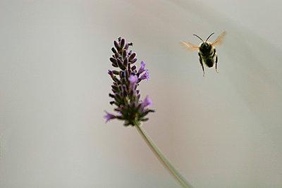 Bienenflug - p4170038 von Pat Meise
