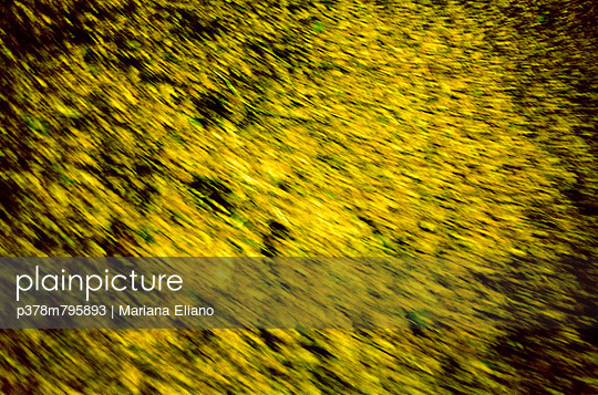 Blurred autumn leaves - p378m795893 by Mariana Eliano
