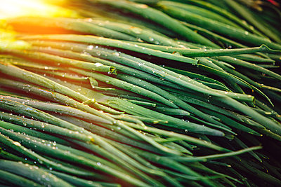 Green onions or leeks at Farmers' market - p1166m2194013 by Cavan Images