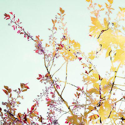 Blütenmontage - p415m822892 von Tanja Luther