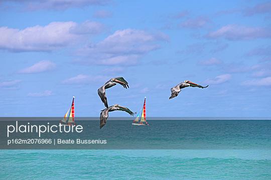 Pelikane am Strand auf Kuba - p162m2076966 von Beate Bussenius