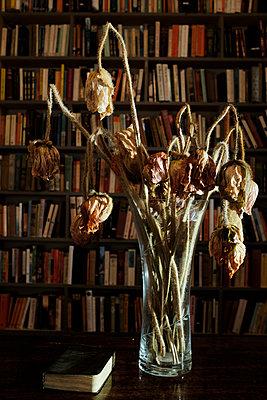 Verwelkte Blumen vor einer Bücherwand - p676m1525947 von Rupert Warren