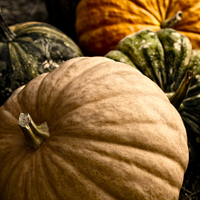 Pumpkins and Gourds - p1154m1057902 by Tom Hogan