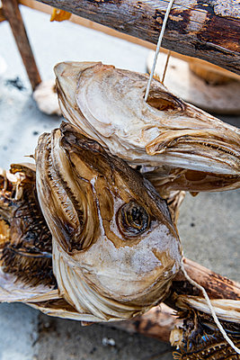 Dry fish for sale at Henningsvaer, Lofoten, Norway - p300m2282465 by Michael Runkel