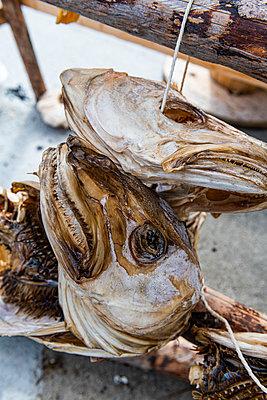 Dry fish for sale, Henningsvaer, Lofoten, Norway - p300m2282465 von Michael Runkel