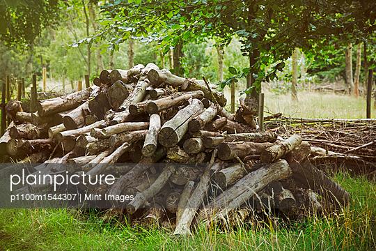 p1100m1544307 von Mint Images