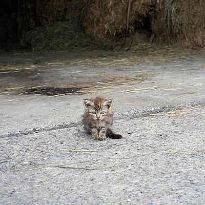 Kitten - p989m932552 by Gine Seitz